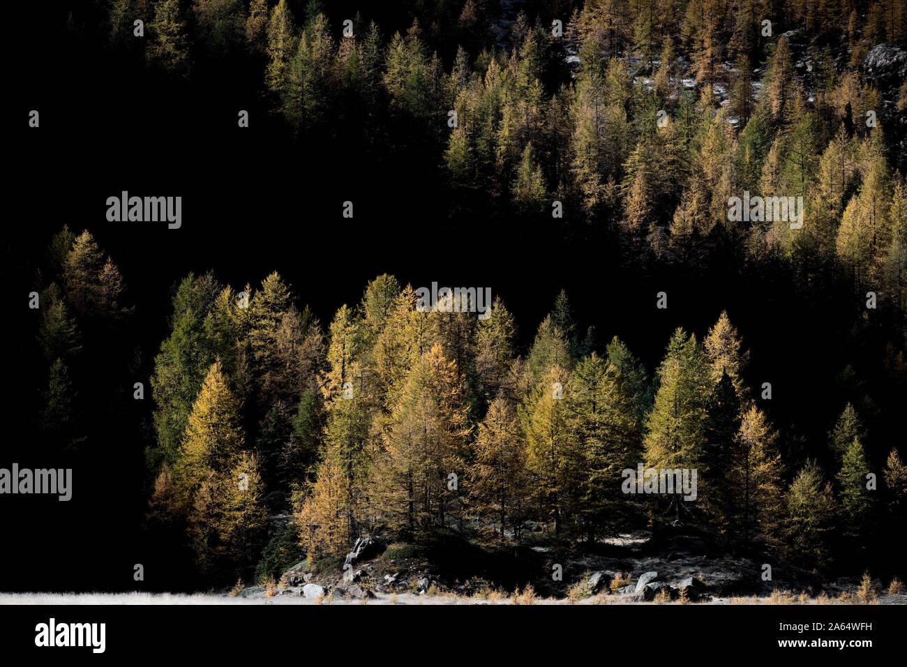 Tutti i colori dell'autunno, montagne delle Alpi Foto Stock
