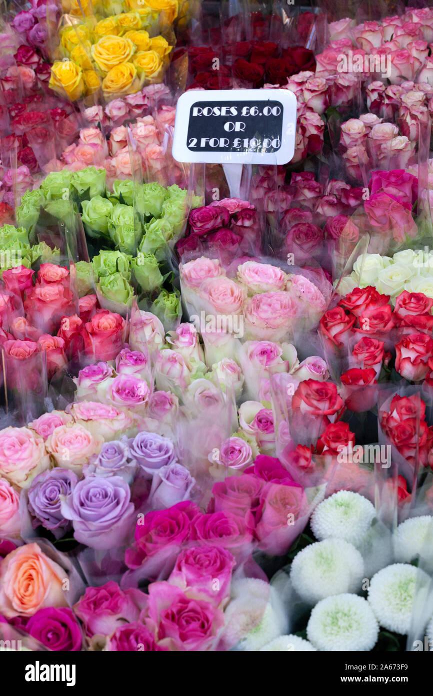 Fiori colorati in vendita presso la Columbia Road Flower Market, Columbia Road, Bethnal Green, East London, London, England, Regno Unito, Europa Foto Stock