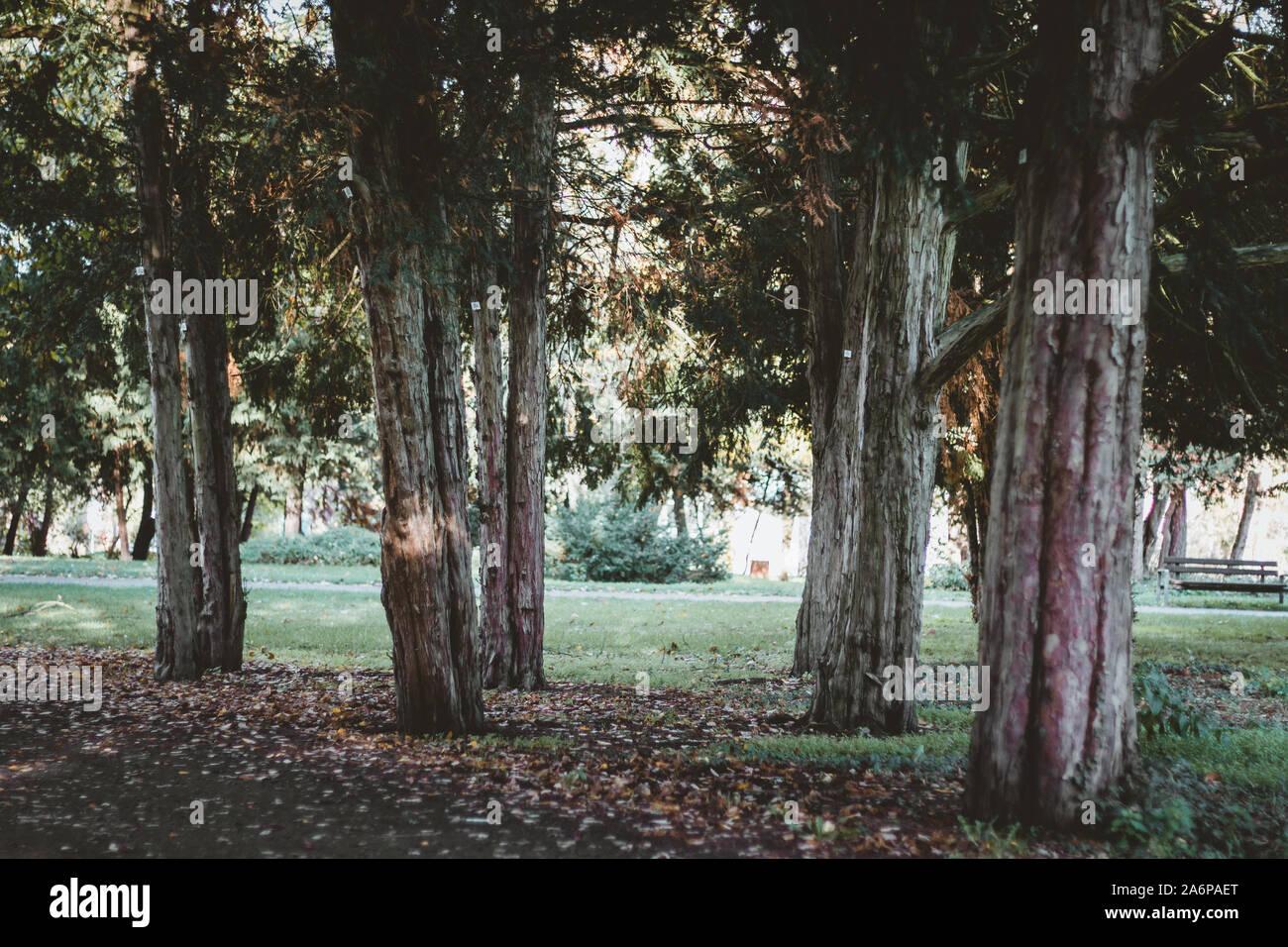 Impressione del parco Foto Stock