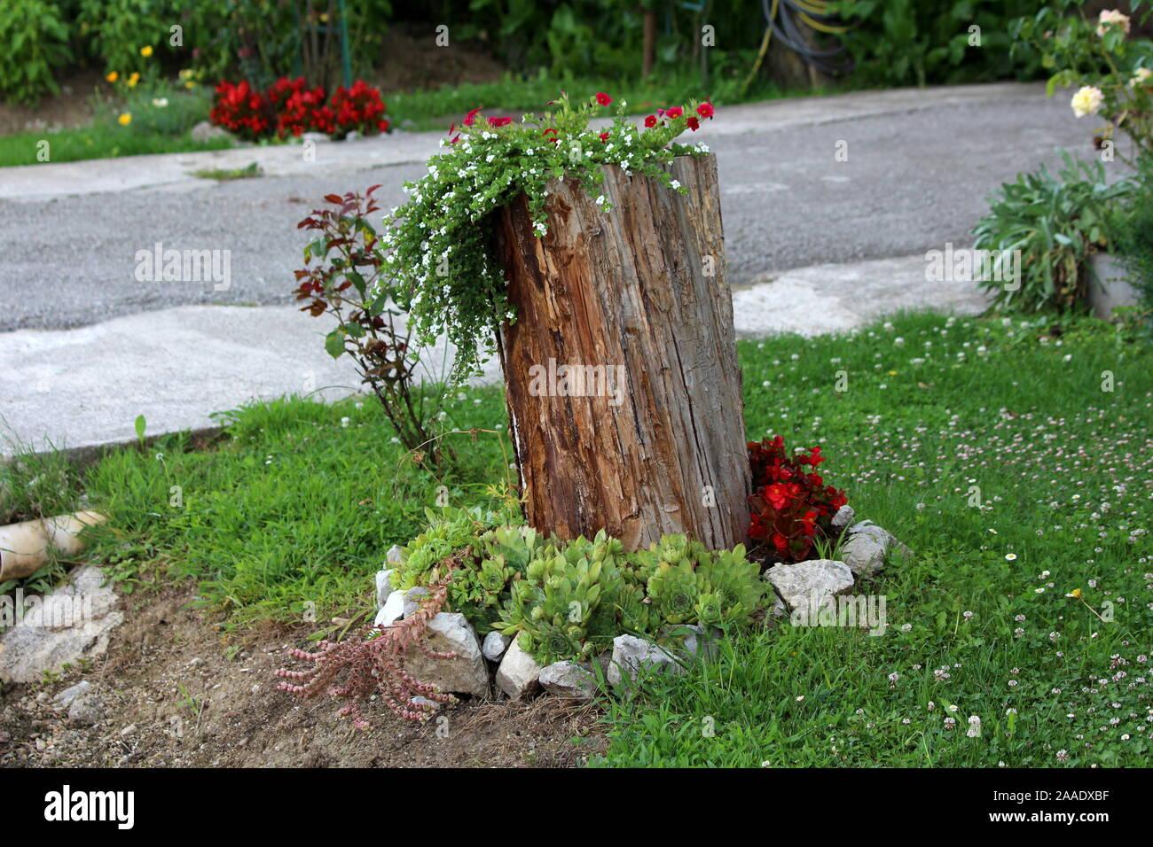 Piante Piccole Da Giardino ceppo di albero a sinistra come giardino decorazione