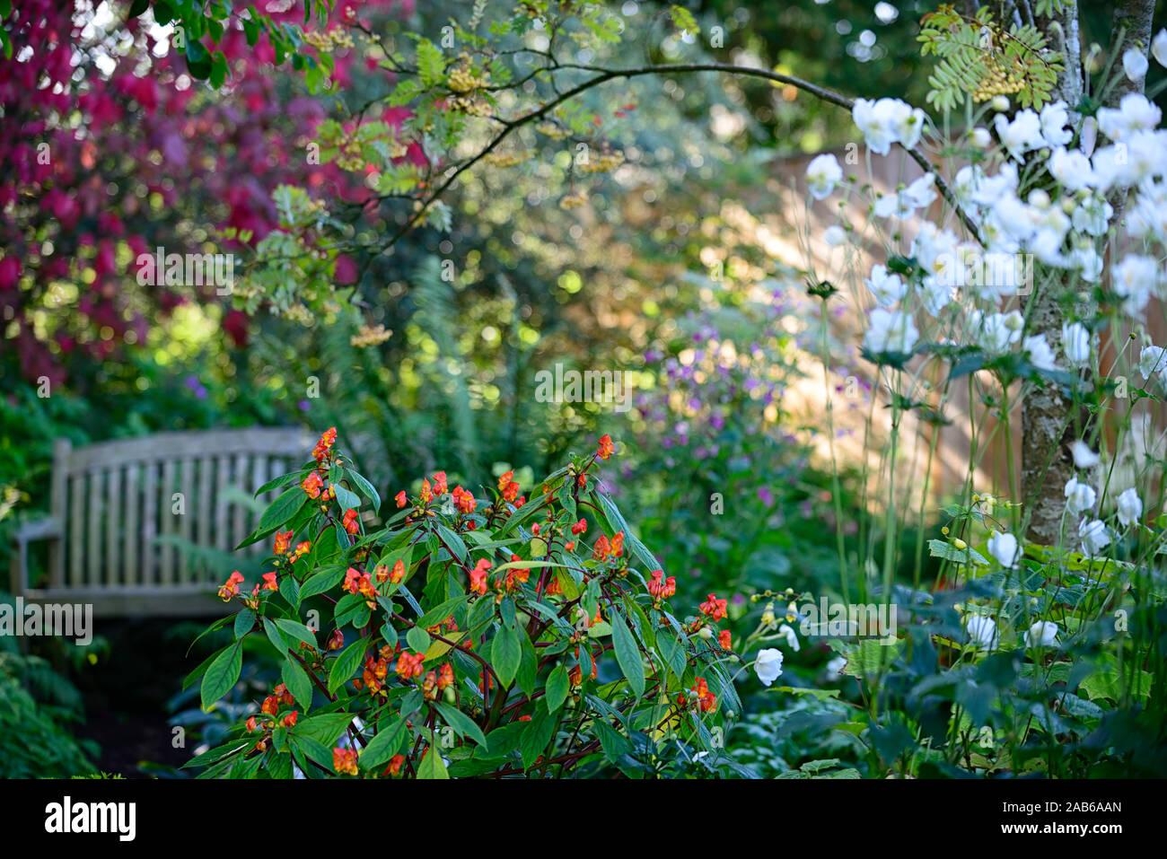 Piante Da Giardino Ombroso giardini all'ombra immagini & giardini all'ombra fotos stock