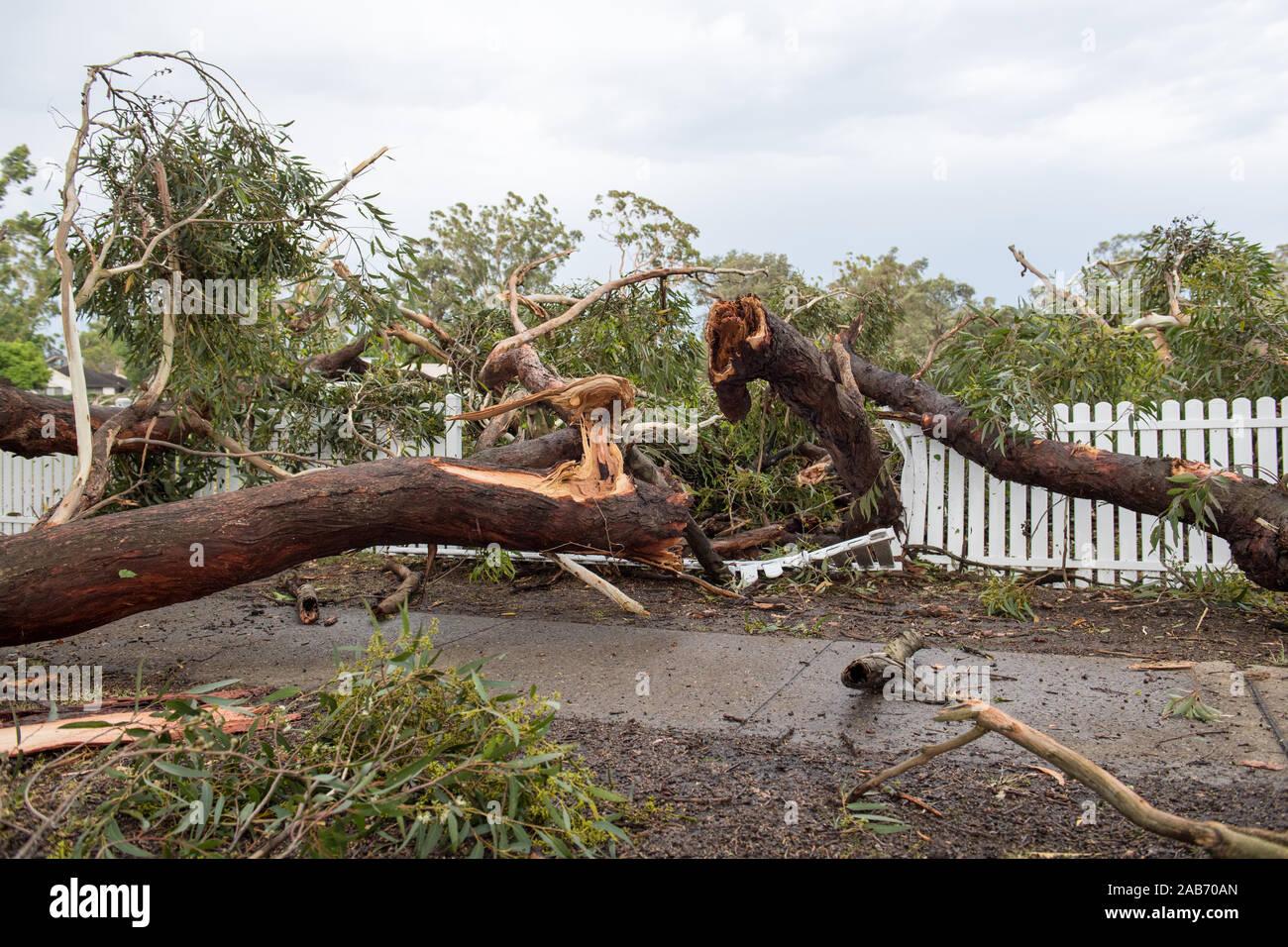 Killara, Nuovo Galles del Sud, Australia. 26 Novembre, 2019. Una tempesta si vede in Killara, NSW, Australia. Diverse case danneggiate lungo con grandi macchie di alberi e linee di alimentazione verso il basso. Credito: mjmediabox/Alamy Live News Foto Stock