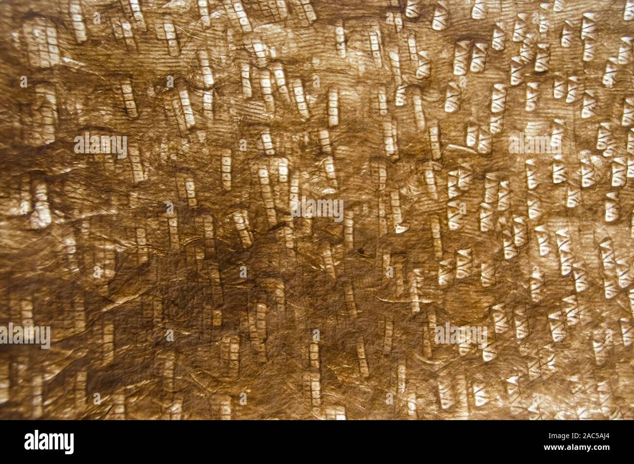 Una vista ravvicinata di kapa (o tapa) costituito da carta di corteccia di gelso da Monte Roen Hufford, Big Island. Foto Stock