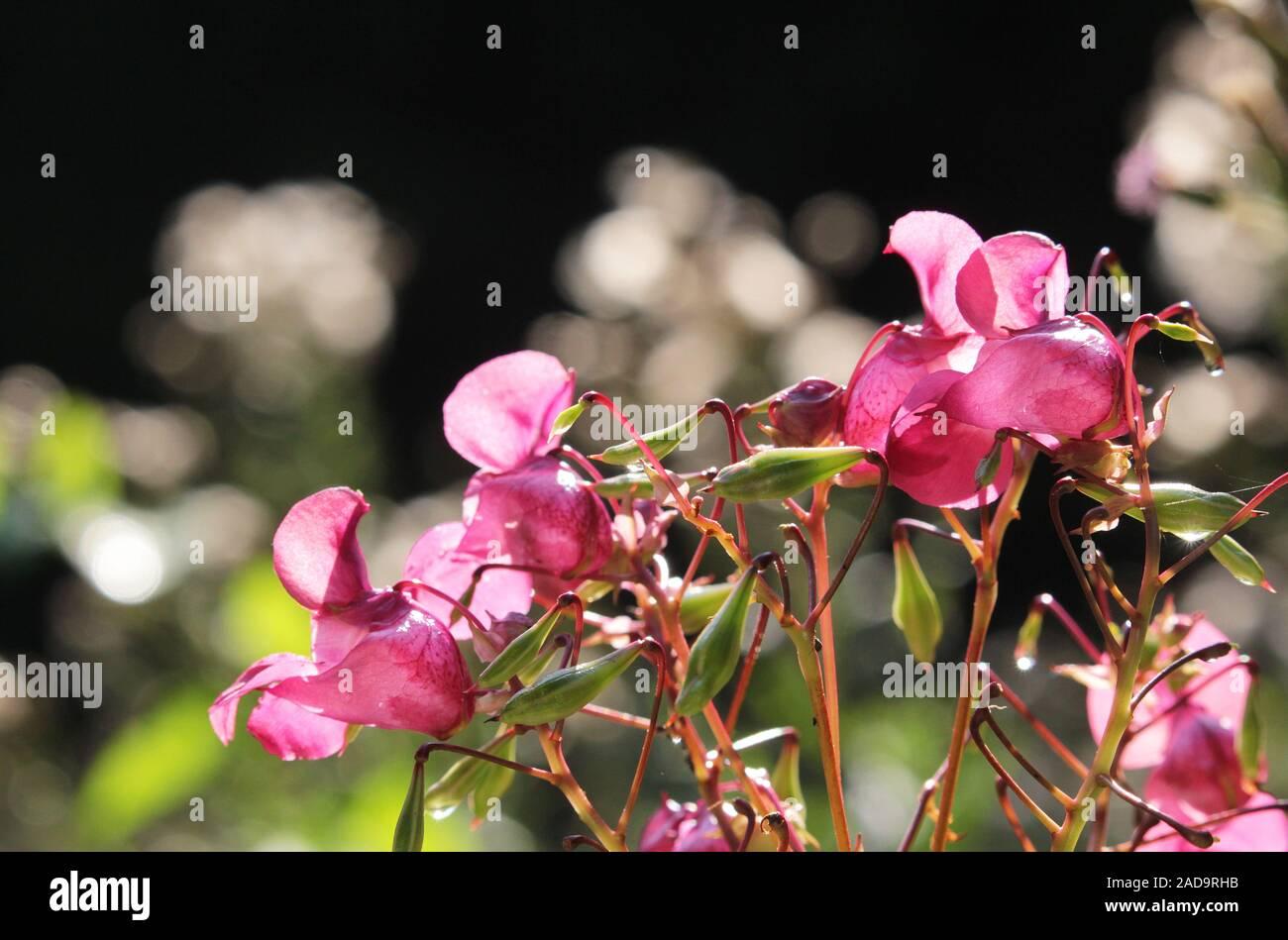 Balsamo Foto Stock
