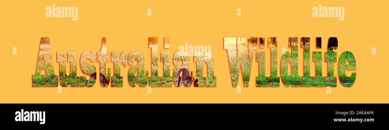 Australian wildlife - testo con immagine di canguri formando le lettere, adatti per il web, la stampa, uso personale o professionale Foto Stock