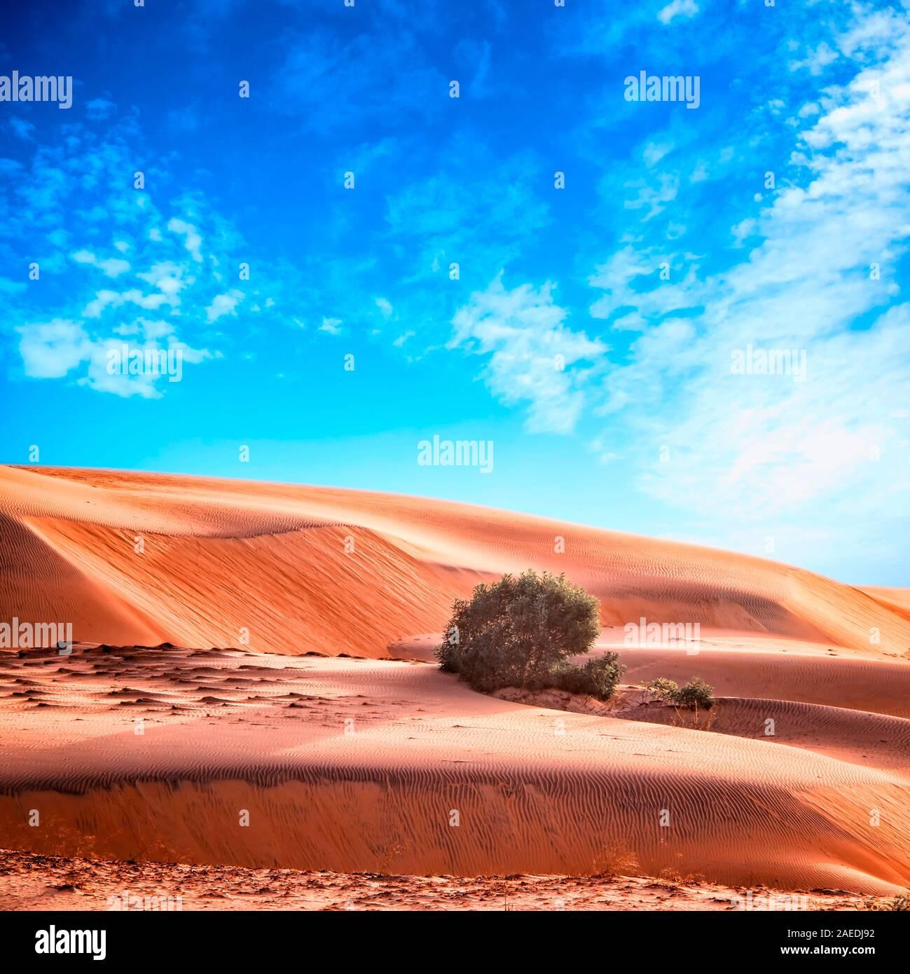 Deserto marocchino paesaggio con cielo blu. Sullo sfondo delle dune. Foto Stock