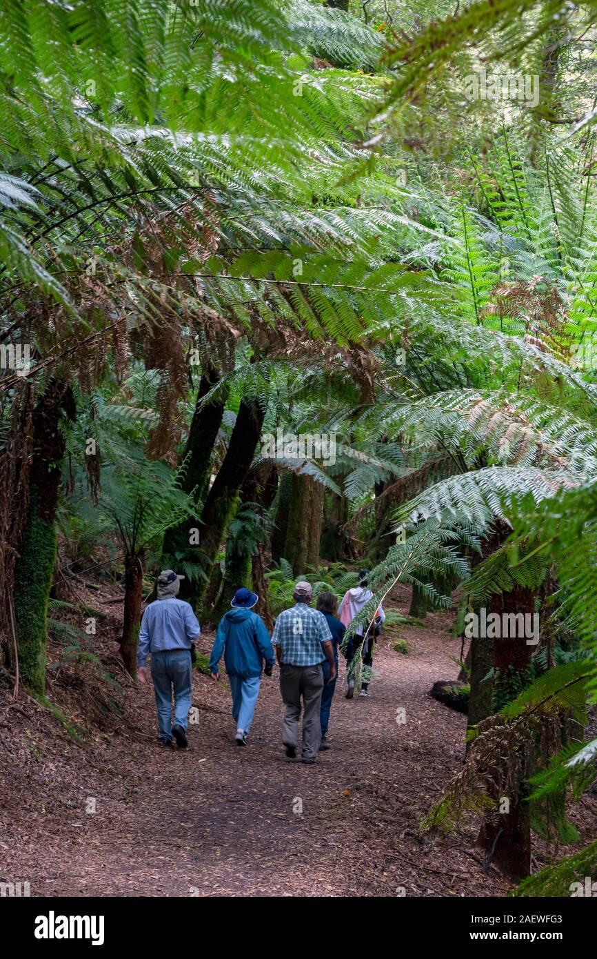 Gruppo camminando sul sentiero natura San Columba Falls riserva statale, Tasmania, Australia. Foto Stock