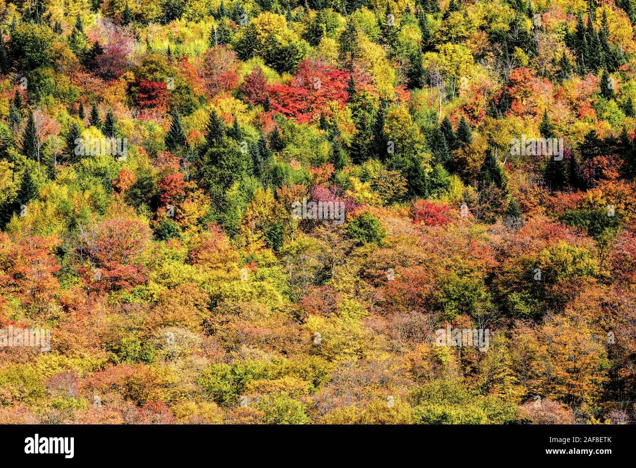 America Canada Quebec, Grands-Jardins Parco nazionale - la foresta e gli alberi in autunno Foto Stock