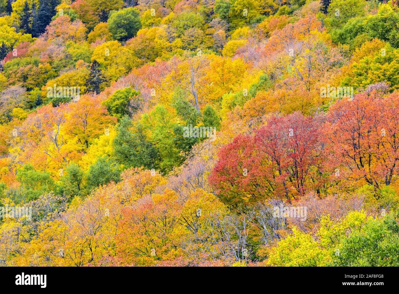 America Canada,Quebec Mont-Sainte-Anne alberi e fogliame in autunno Foto Stock