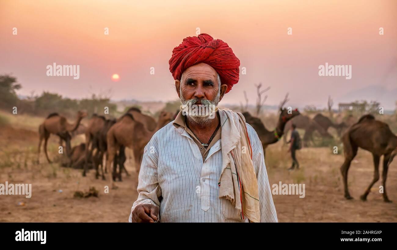 Pushkar, India - nov. 20, 2015. Un cammello di Rajasthani trader si trova di fronte la sua mandria di cammelli che è in vendita presso l'annuale del cammello di Pushkar Fair. Foto Stock