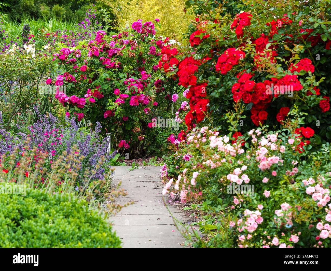 Luminoso fiore esposizione intorno ad un sentiero del giardino in un giardino cottage in estate Foto Stock