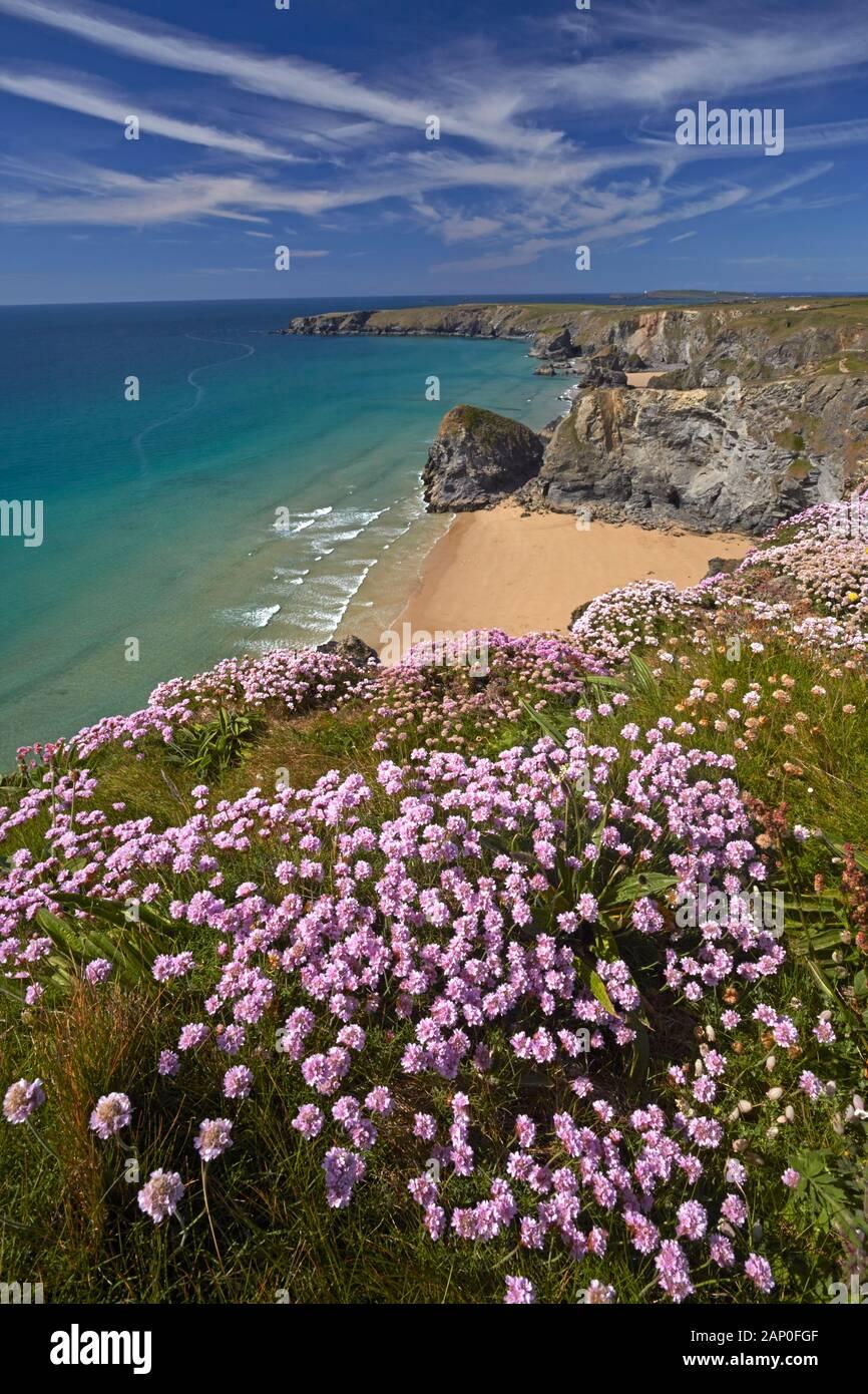 La parsimonia crescente sul clifftops sopra Bedruthan Steps a Carnewas sulla North Cornwall coast. Foto Stock
