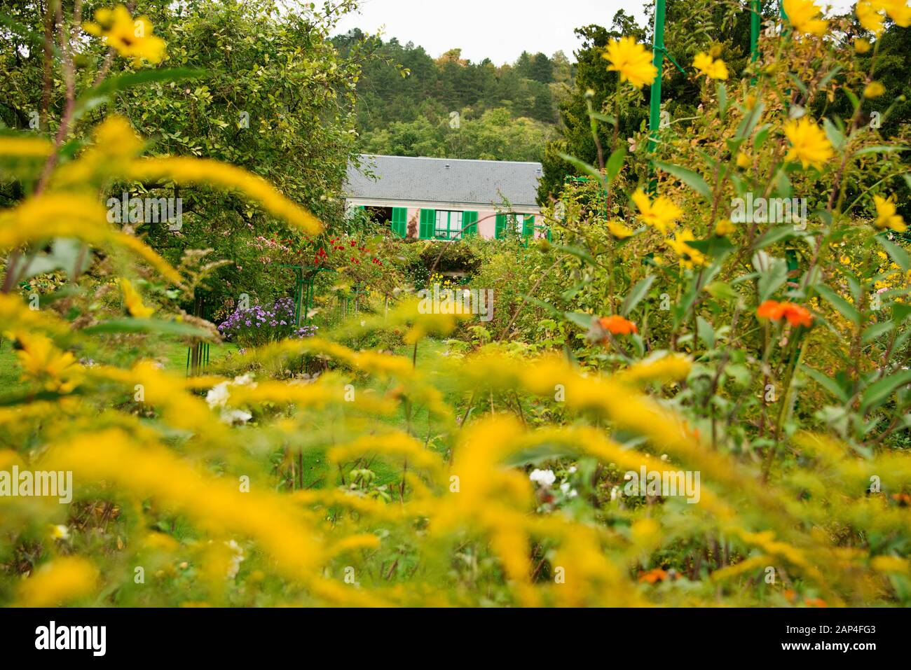 Fiori Gialli Normandia.Giverney Immagini Giverney Fotos Stock Alamy