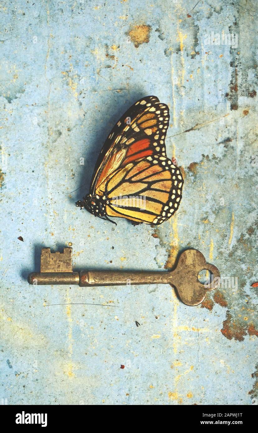 Vintage ancora vita scena di una farfalla morta e vecchia chiave su rustico invecchiato carta blu colorato e sfondo di legno. Segreti nascosti sbloccati, metamorfosi Foto Stock