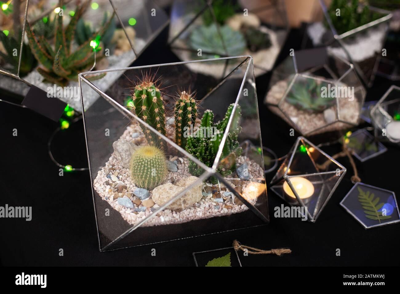 Piante Grasse Da Giardino piante grasse da appartamento immagini & piante grasse da