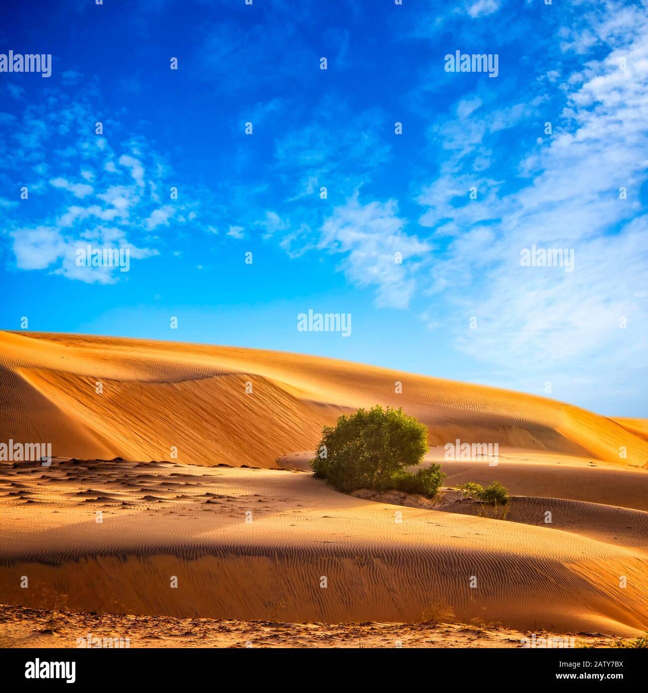 Sfondo naturale con paesaggio desertico e cielo blu in Marocco, Nord Africa. Ci sono dune di sabbia nel Sahara Foto Stock