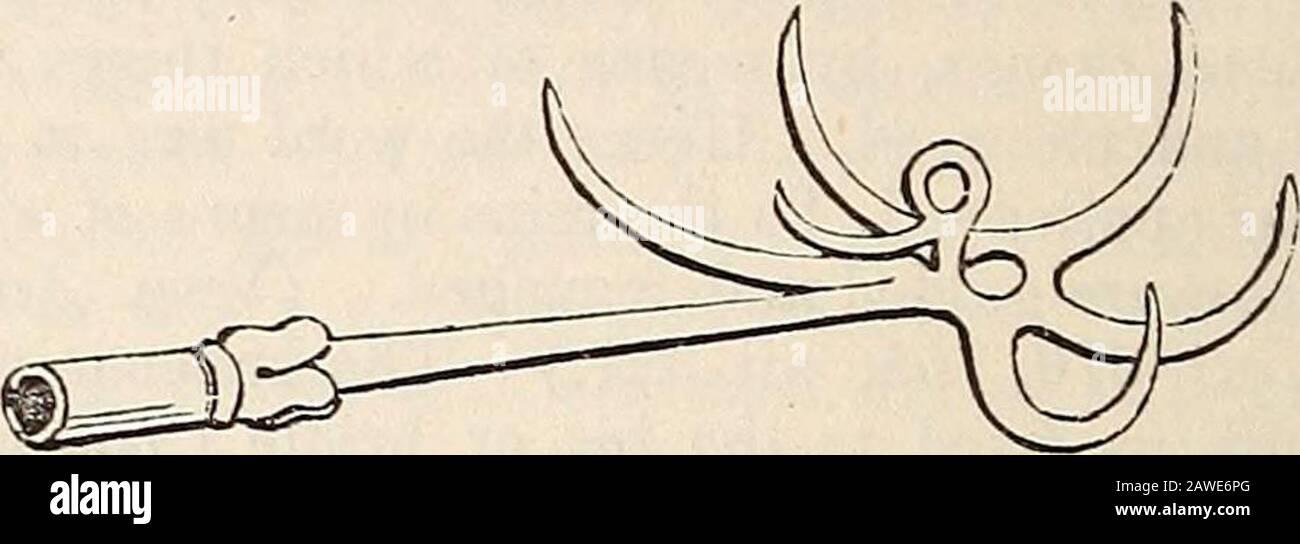 Un dizionario di antichità greche e romane.. fascigiisliarpaginetuli striati am crispis foliis et vohitis tene-m. I commentatori hanno faticato invano a spiegare il termine ; ed è anche molto doppiamente che la lettura sia corretta. Come il wordstands, sembra riferirsi ad una sorta di scroll-pattern. (Vedi Schneider, Newton, e gli altri commentatori e traduttori, I. c, e un'aggiunta di Bailey all'articolo di Forcellini.) [P. S.] HARPAGO (apwdyn : vkos: Kpzdypa, dim.Kpedypis), un grapping-ferro, un trascinamento, un gancio di carne.(es. XXVII. 3 ; 1 Sam. II. 13, 14. Sett.; Arisoph.Vesp. 1152; Anax Foto Stock