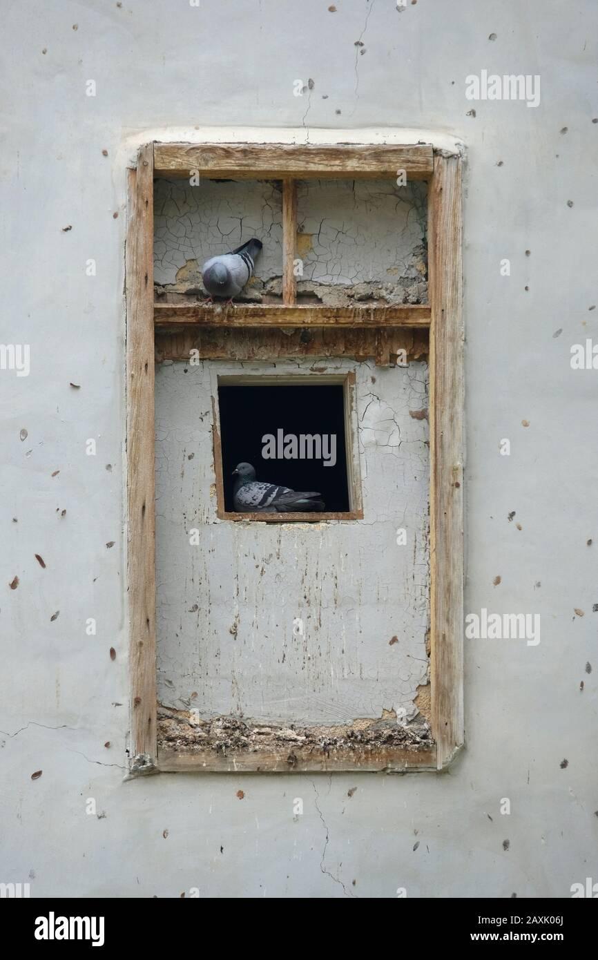 Piccioni appollaiati in una finestra nella città di Gerico nei territori palestinesi. Cisgiordania, Israele Foto Stock