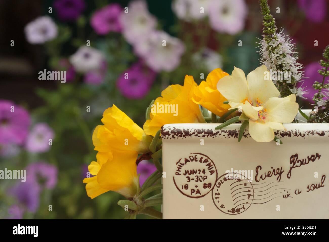 Fiori Bianchi E Gialli Nome 11 Lettere.Fiori Su Francobolli Immagini Fiori Su Francobolli Fotos Stock