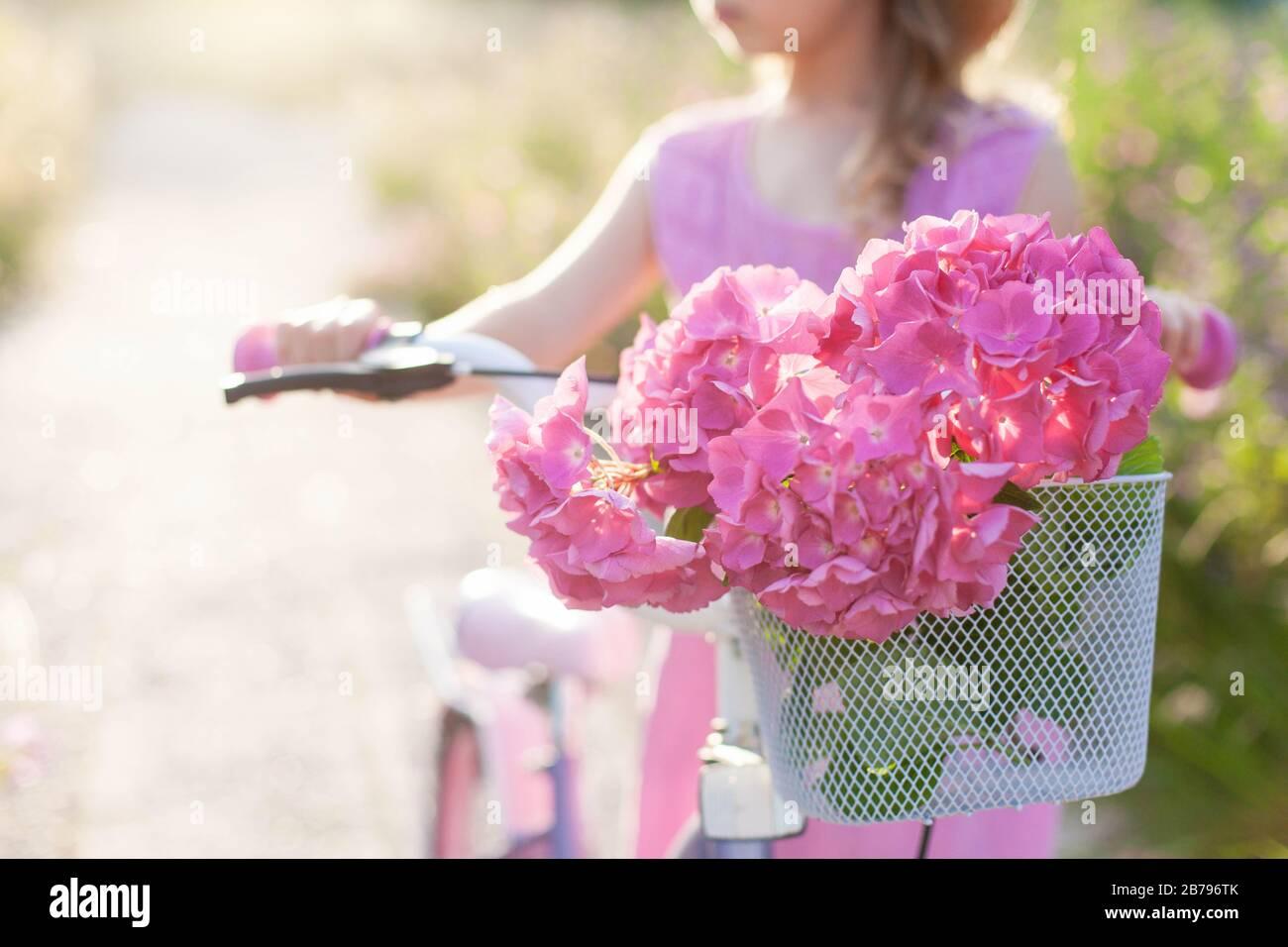 Fiori rosa di hydrangea in cestino di bicicletta al tramonto. La bambina sta girando in bicicletta con il bouquet. Il bambino sta godendo le vacanze Foto Stock
