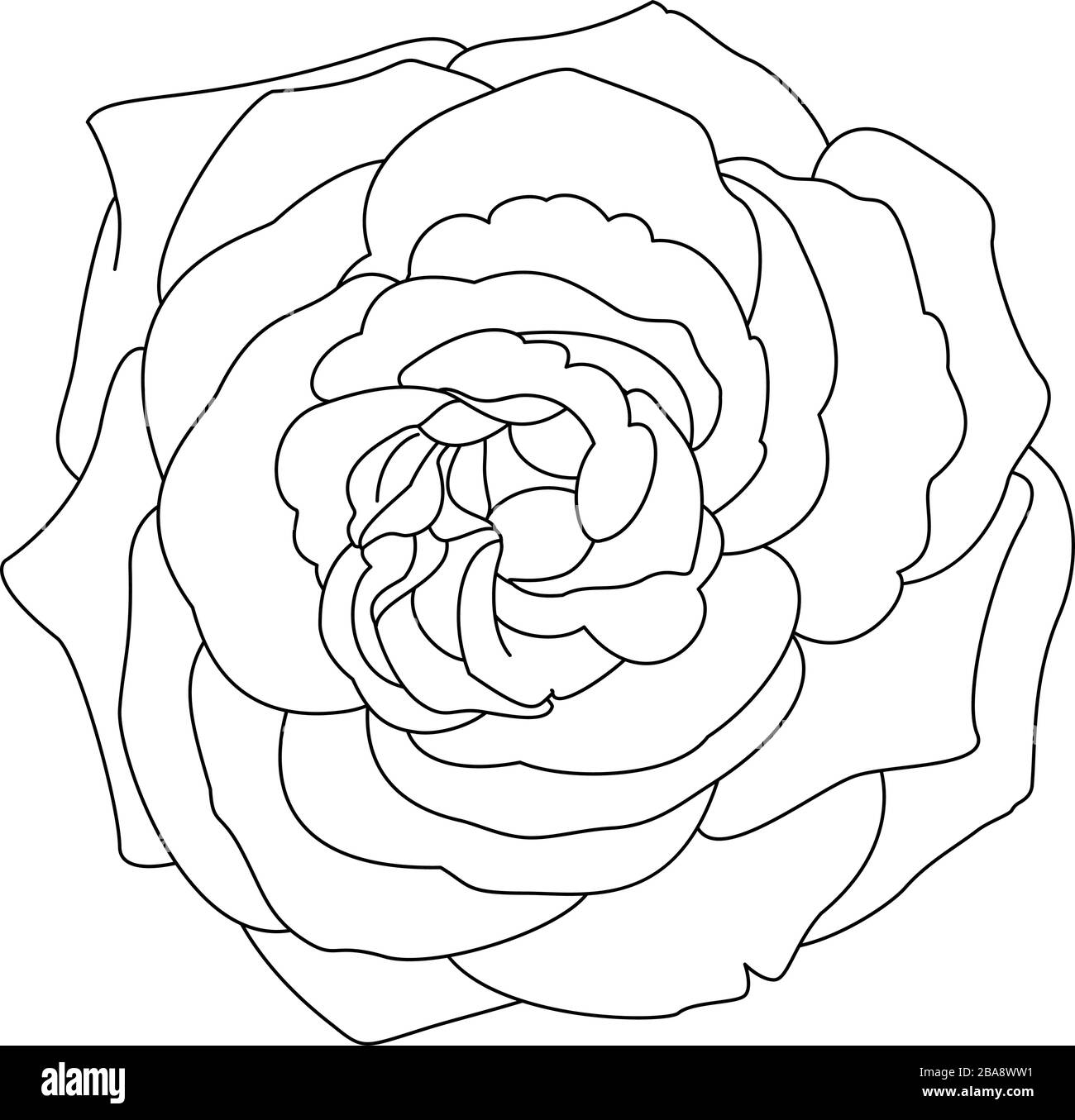 Coloring Page Rose Flower Immagini E Fotos Stock Alamy