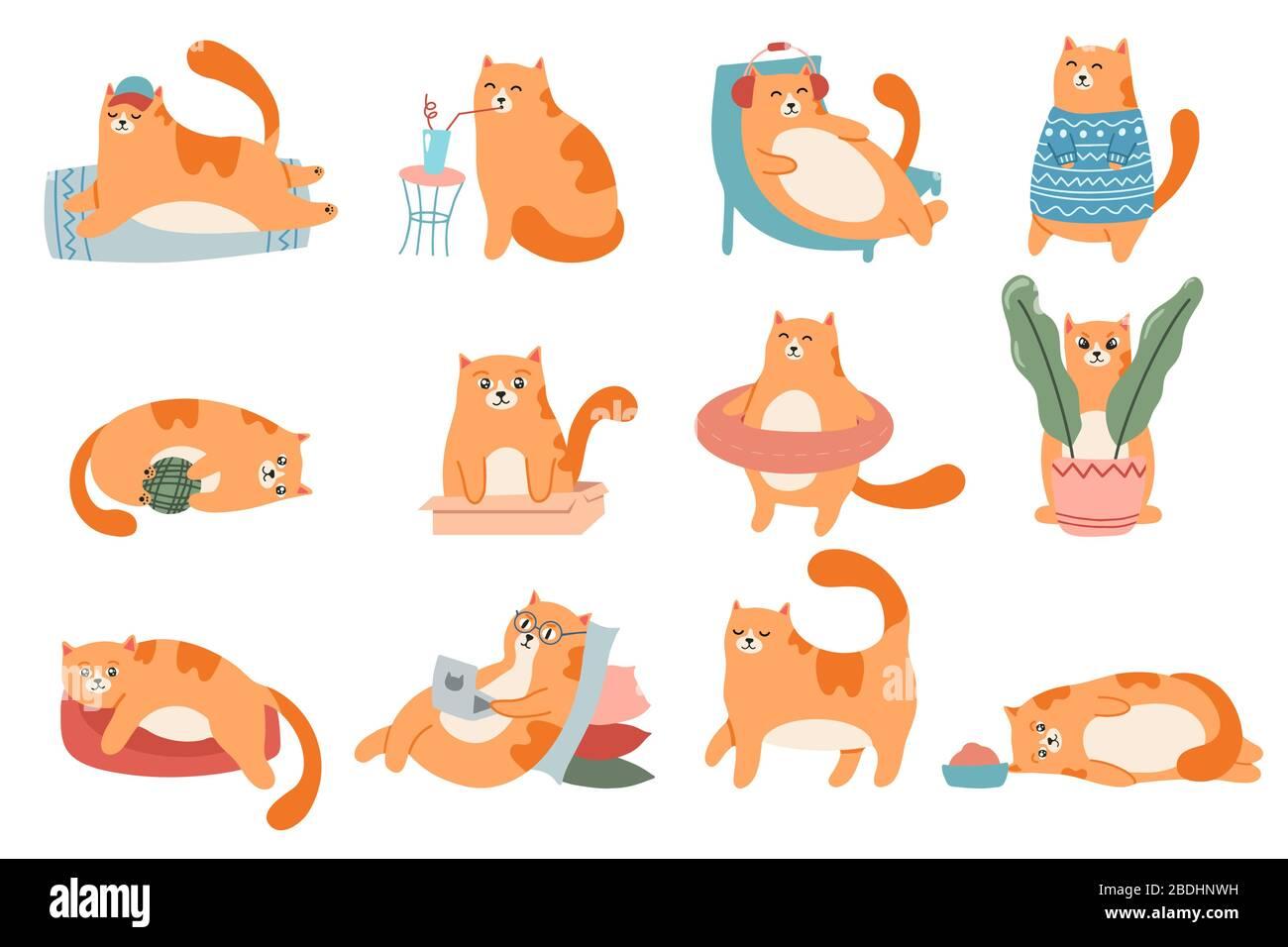 Gatti carini. Gatto in scatola, adorabile gattino rosso