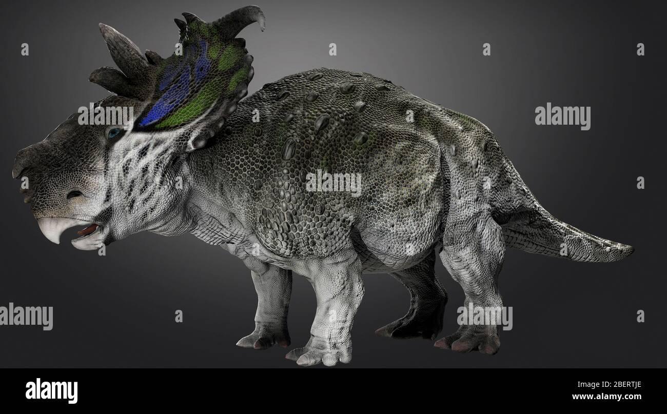 Dinosauro Pachyrhinosaur, vista laterale su sfondo grigio. Foto Stock
