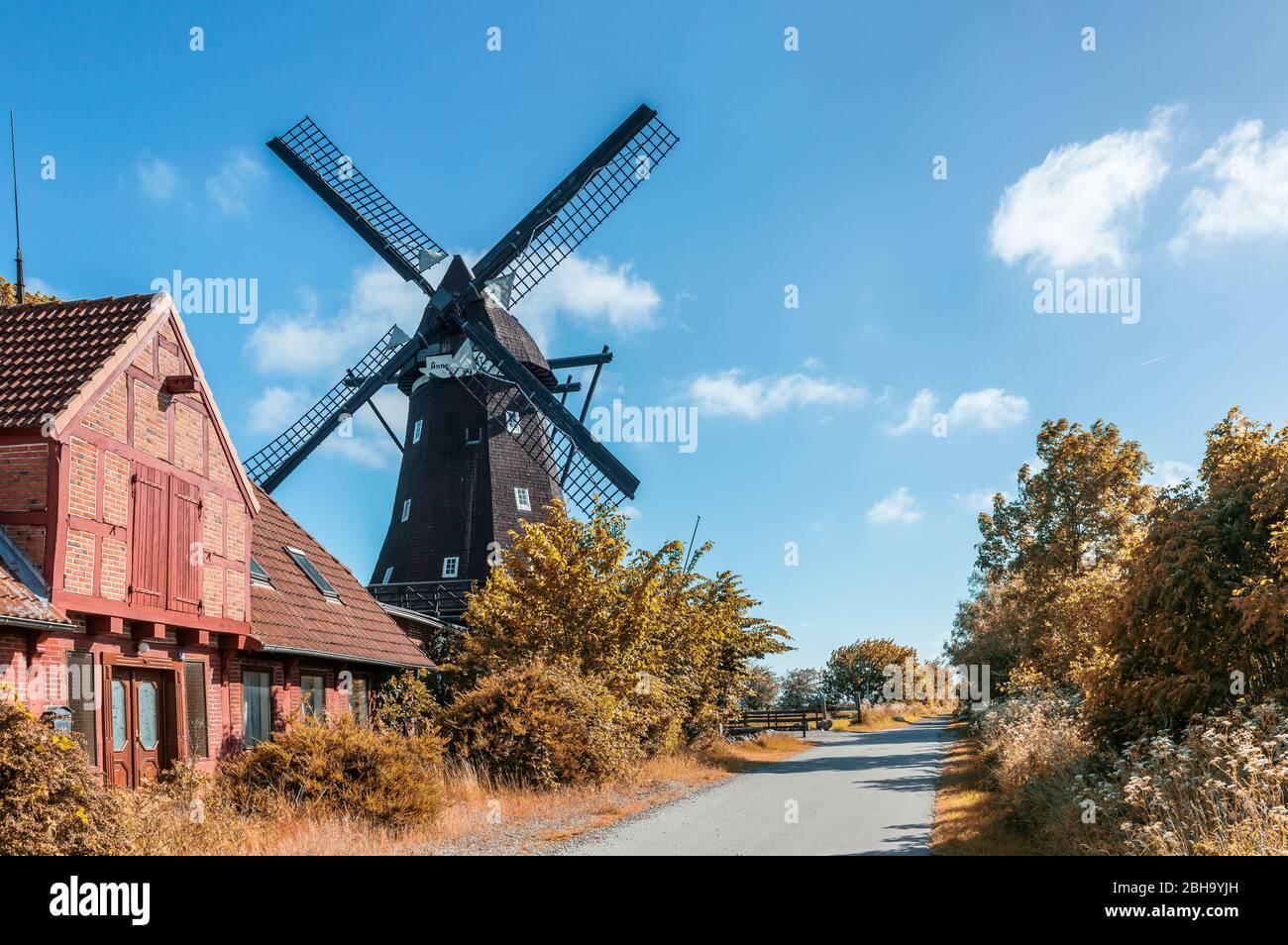 Lemkenhafen, Fehmarn, Schleswig-Holstein, Germania del Nord, mulino a vento sull'isola di Fehmarn Foto Stock