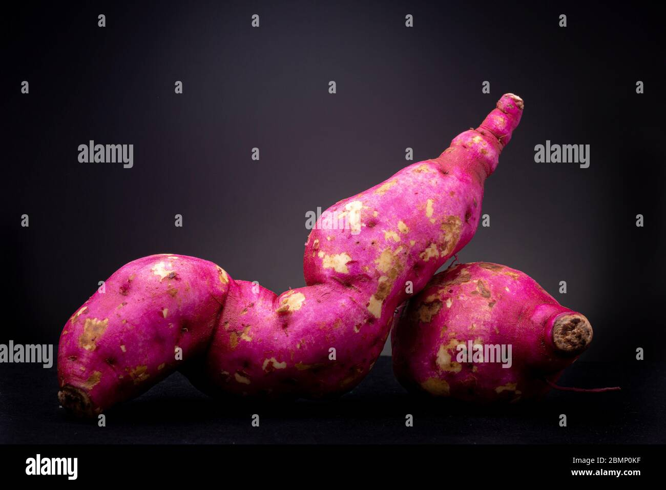 Coppia di fresco magenta brillante vivace organico crudo patate dolci o yam in studio di illuminazione contrastato con uno sfondo grigio scuro Foto Stock