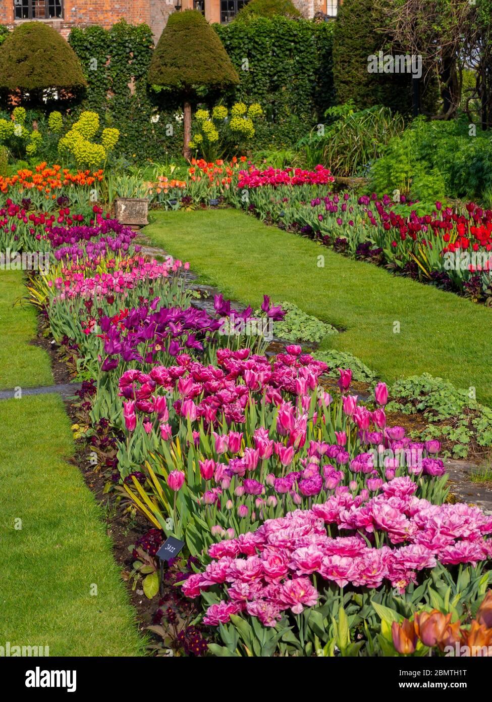 Chenies Manor Sunken giardino con colorate varietà di tulipani, guardando verso la casa Tudor Manor in aprile. Foto Stock