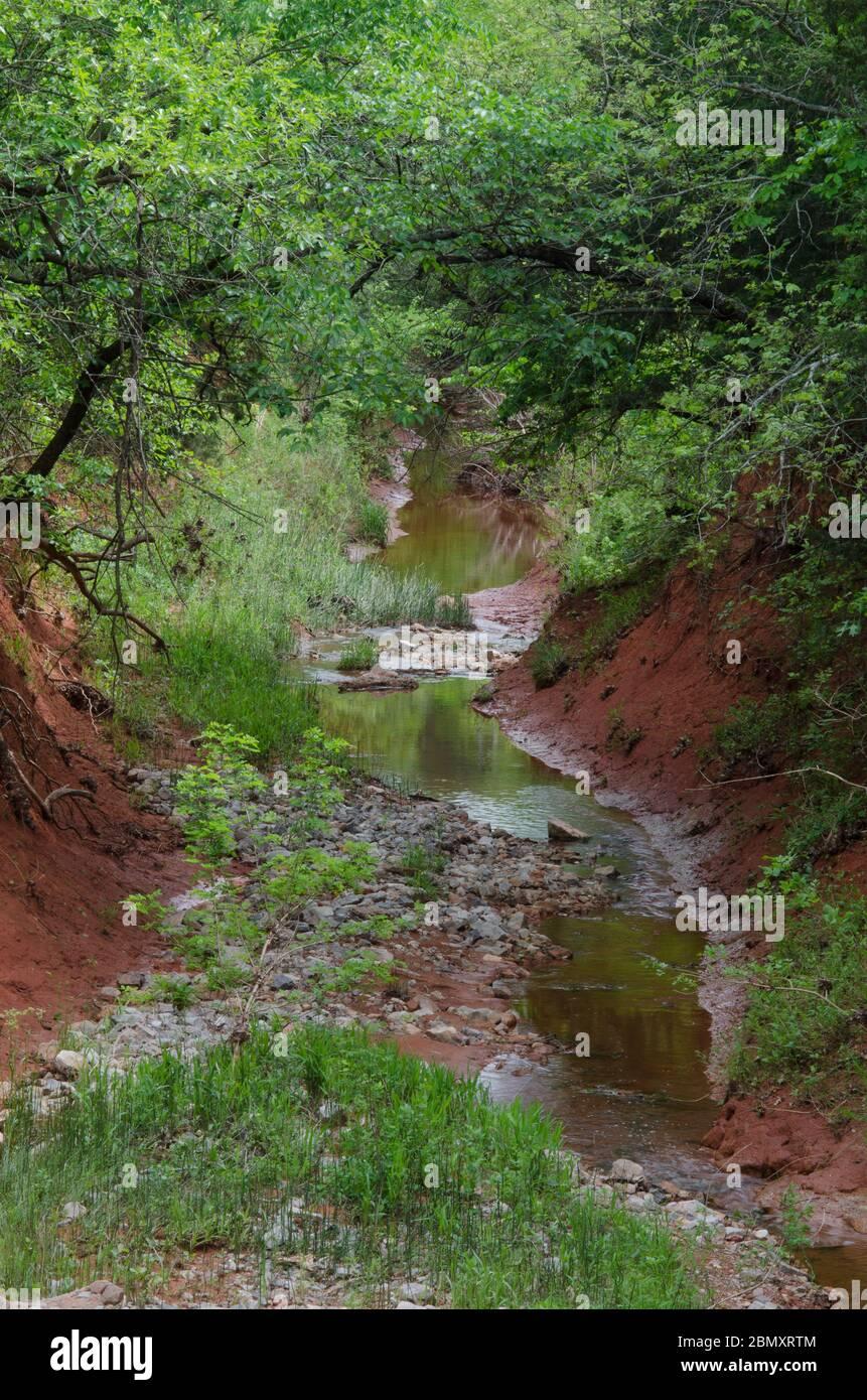 Little Buckhead Creek, presso la Lexington Wildlife Management Area, Oklahoma Foto Stock