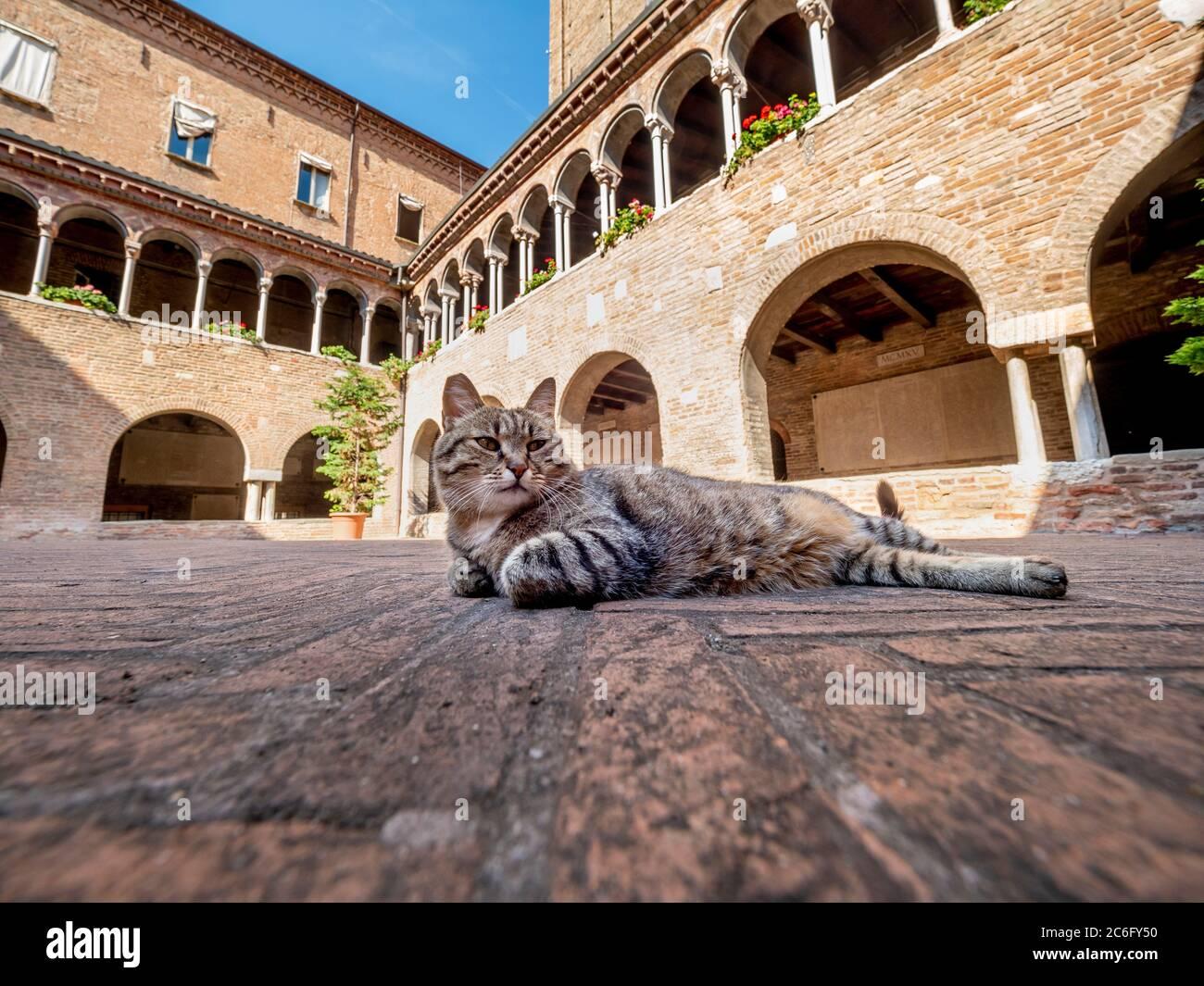 Chiesa gatto relax nel chiostro della Basilica di Santo Stefano. Bologna, Italia. Foto Stock
