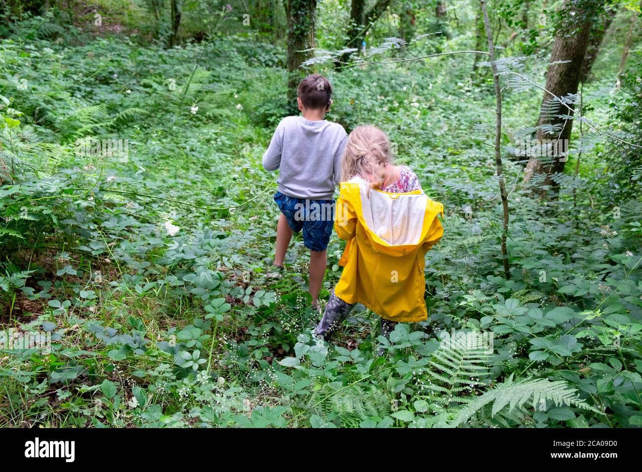 Bambini vista posteriore in vacanza di campagna dopo il blocco allevato Giocare a piedi in un bosco di campagna frondoso nel Galles del Carmarthenshire REGNO UNITO KATHY DEWITT Foto Stock