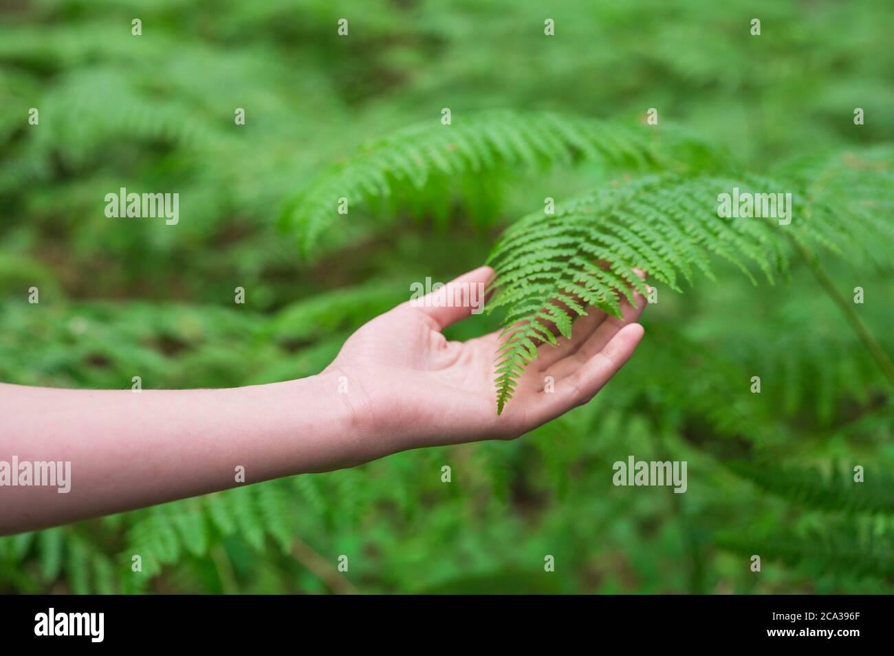 Mano femminile, con le dita lunghe e aggraziate tocca delicatamente la pianta, foglie di felce. Primo piano di una persona irriconoscibile. Immagine di alta qualità. Foto Stock