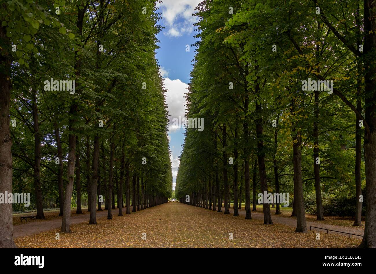 Un bel vicolo infinito di alberi alti conduce a. orizzonte Foto Stock