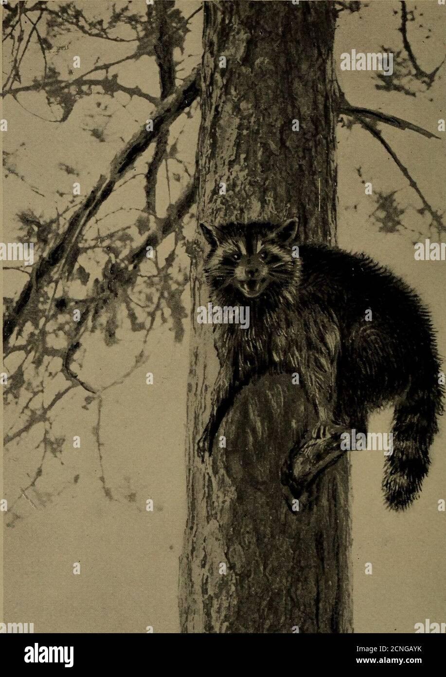 . Vita familiare nel campo e nella foresta; gli animali, gli uccelli, le rane e i salamandri . Foto Stock
