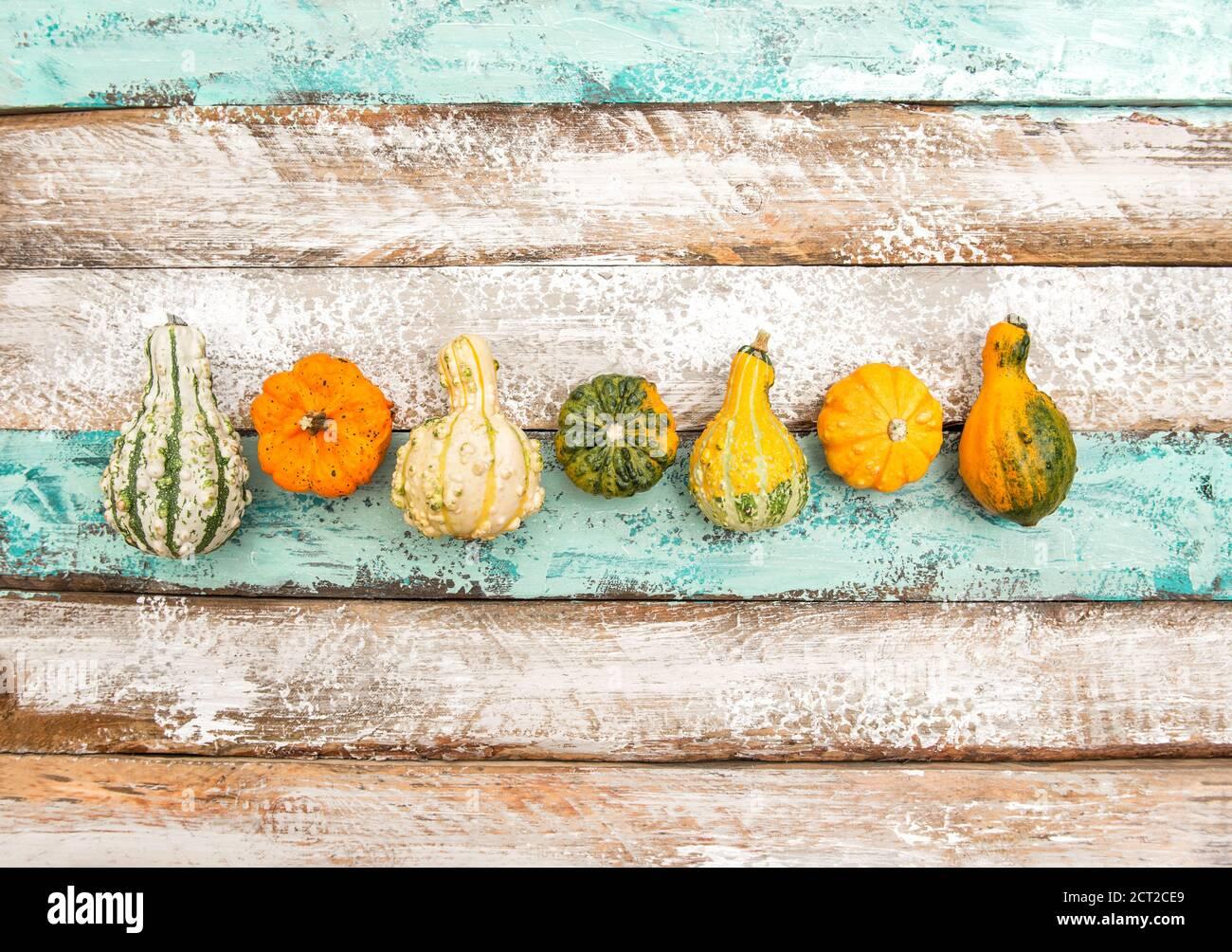 Autunno. Halloween. Ringraziamento. Zucca su sfondo di legno Foto Stock