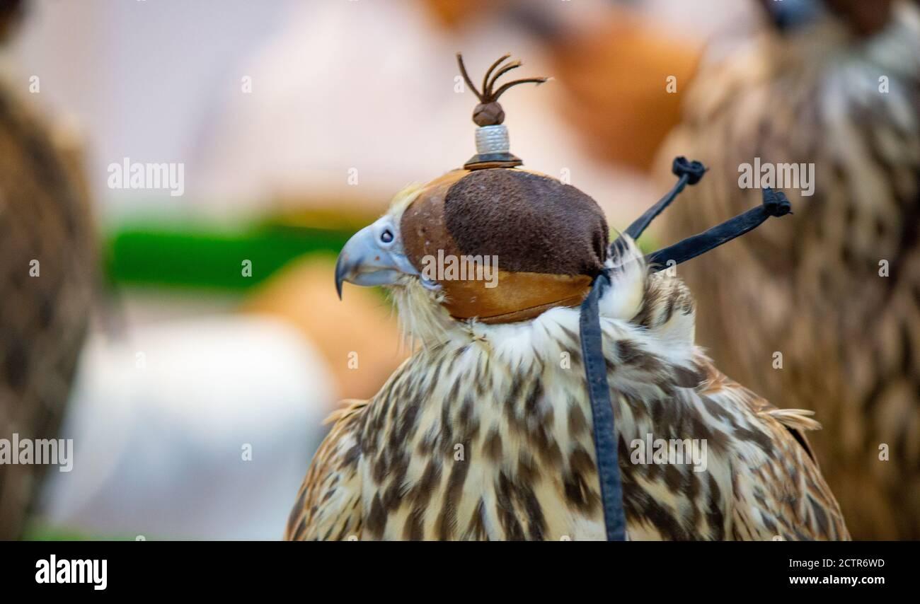 serpente uccelli e rapace gatto in pelle antigraffio cane falco BLCVC Guanti da lavoro per manipolazione di falconeria