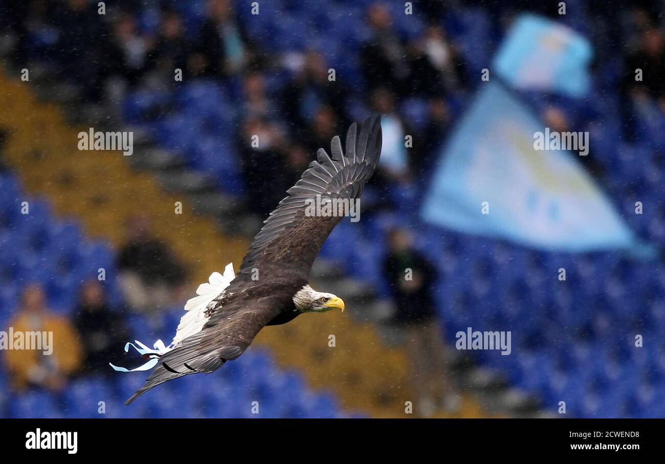 A trained eagle flies before the Italian Serie A soccer match between Lazio and Catania at the Olympic stadium in Rome November 28, 2010. The eagle represents Lazio's traditional club symbol  REUTERS/Alessandro Bianchi (ITALY - Tags: SPORT SOCCER ANIMALS SOCIETY) Foto Stock