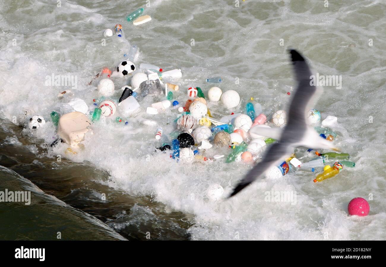 Un gabbiano sorvola palle sportive, bottiglie di plastica e altre lettiere che si sono accumulate nelle correnti del Tevere nel centro di Roma il 15 febbraio 2008. REUTERS/Alessandro Bianchi (ITALIA) Foto Stock