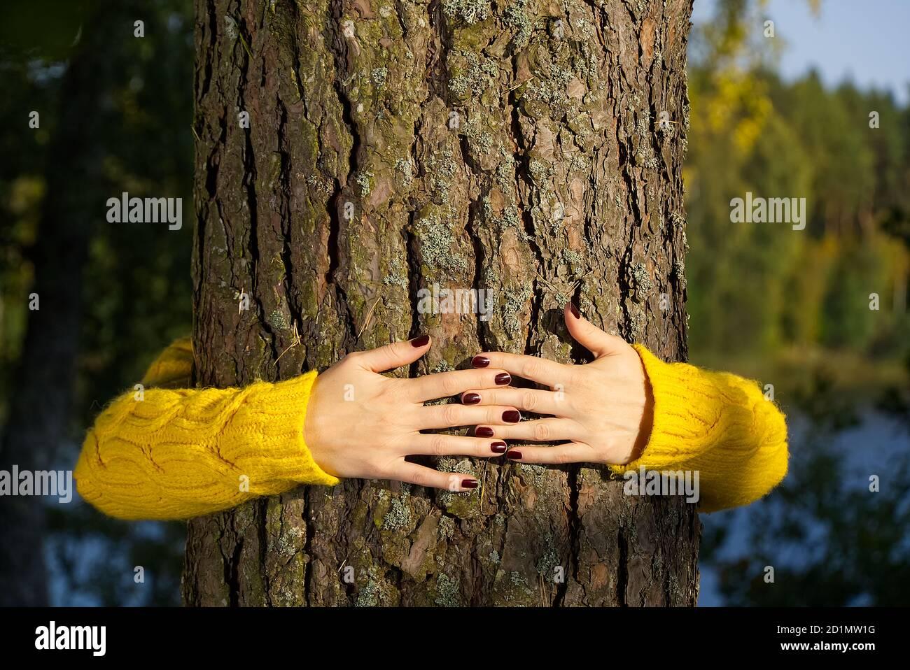 Le mani della donna abbracciano il tronco di pino nella foresta d'autunno Ecologia e ambiente concetto, eco lifestyle - cambiare il mondo, la protezione per la vita e il pianeta Foto Stock