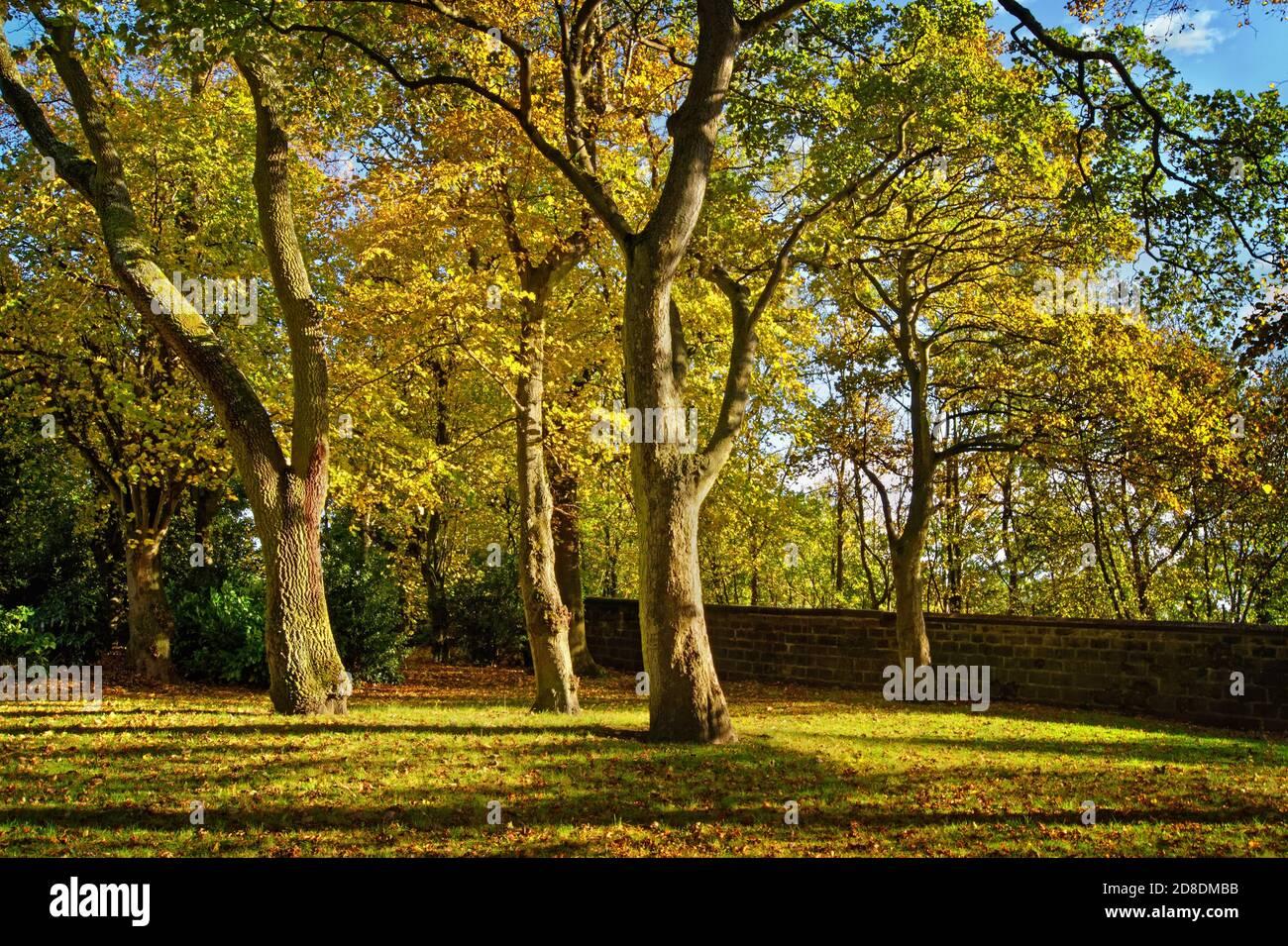 Regno Unito, South Yorkshire, Barnsley, Locke Park in autunno Foto Stock