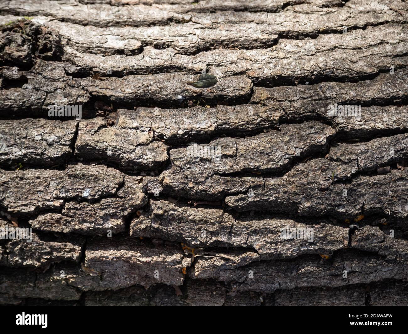 Struttura di vecchio tronco di albero in natura Foto Stock