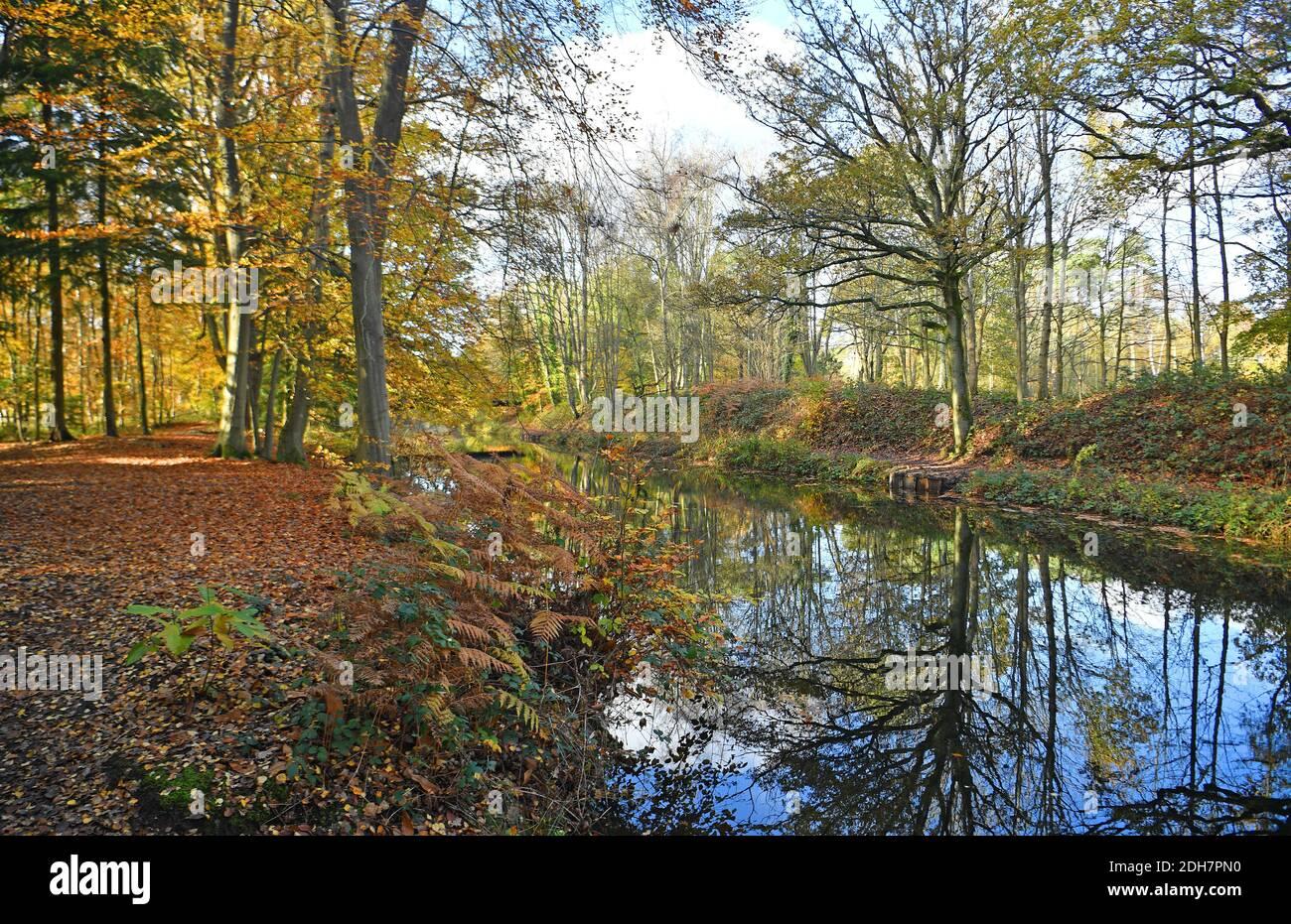 Foto per una caratteristica su Wellesley Woodland, Aldershot - Autunno weekend passeggiate. Canale di Basingstoke. Foto Stock