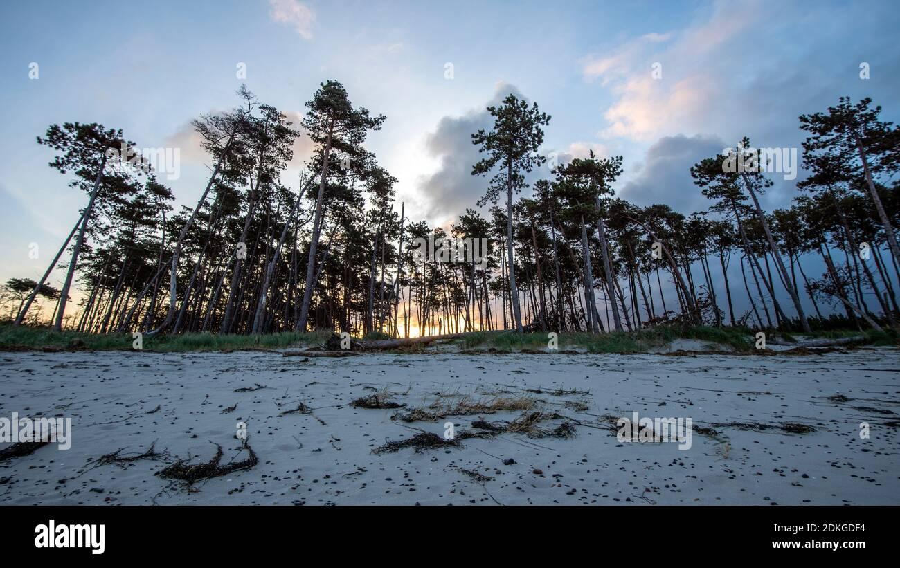 Germania, Meclemburgo-Pomerania occidentale, Prerow, alba sulla spiaggia occidentale, Mar Baltico Foto Stock