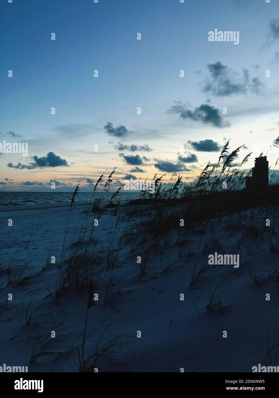 Silhouette piante sulla spiaggia contro il cielo durante il tramonto Foto Stock