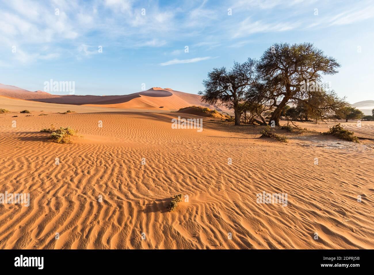 Le panoramiche Sossusvlei e Deadvlei, argilla e saline con alberi di Acacia intrecciati circondati da maestose dune di sabbia. Namib Naukluft National Park, principale attrazione turistica e destinazione di viaggio in Namibia. Foto Stock