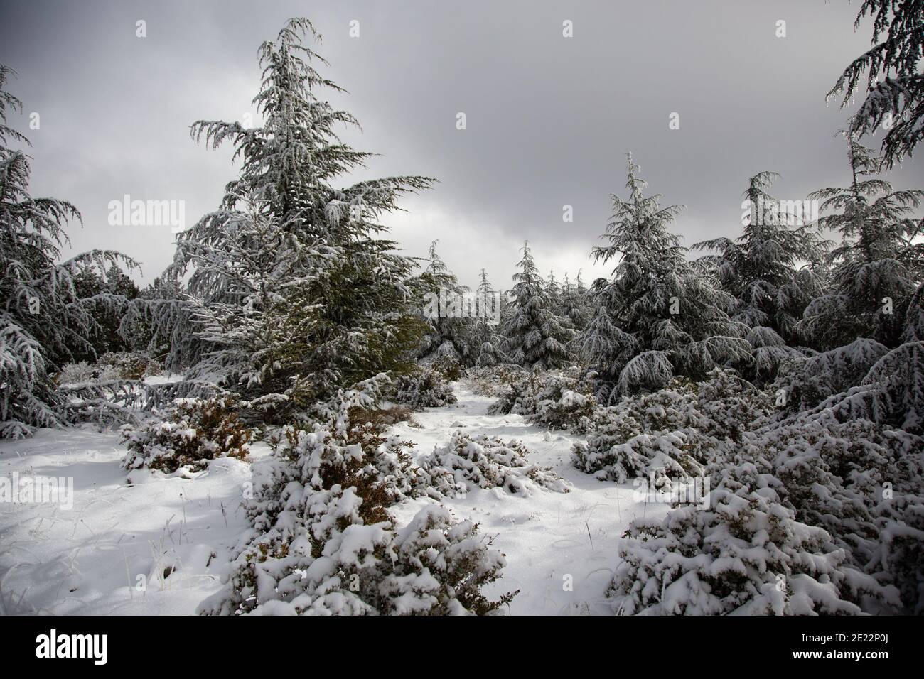 Scene invernali nelle montagne della Provenza, Francia. Foto Stock