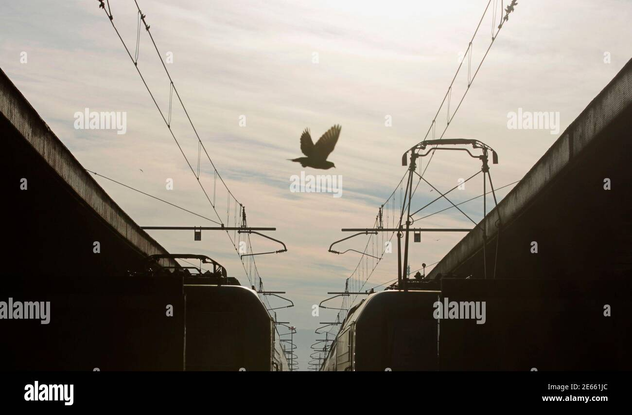 A pigeon flies over two trains at the Termini railway station in Rome January 27, 2012. Italian rail workers went on strike on Friday against government measures aimed at opening up public services, including trains and buses, and professions to more competition. REUTERS/Alessandro Bianchi (ITALY - Tags: BUSINESS TRANSPORT CIVIL UNREST) Foto Stock