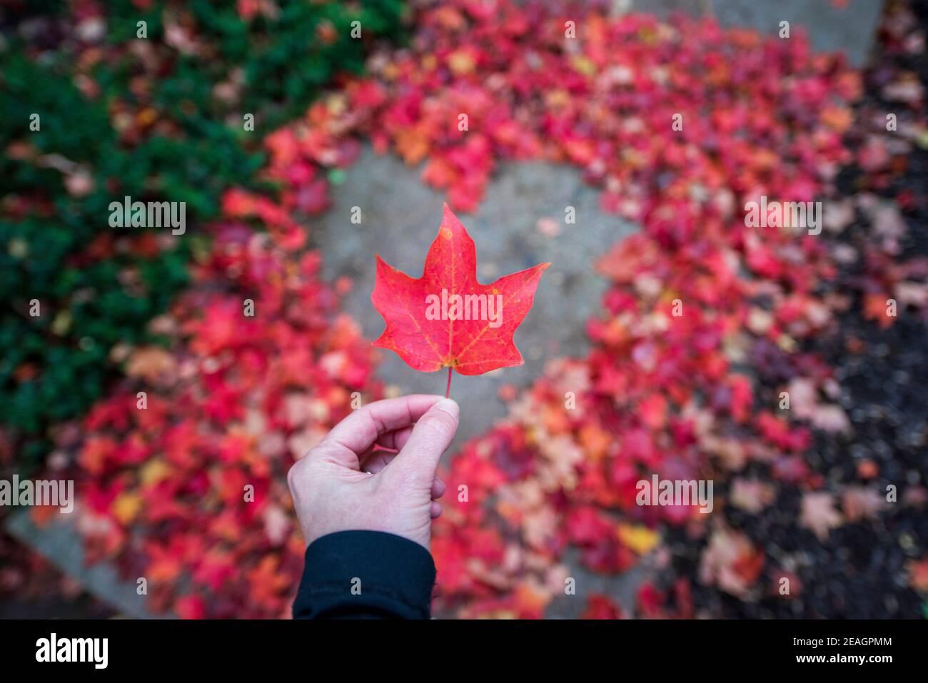 Giovane donna che tiene una singola foglia di acero rosso in piedi a forma di cuore creata da foglie di acero rosso e arancio autunno. Superficie asfaltata al centro. Pl. Vuoto Foto Stock